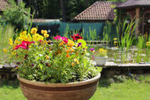 House garden with small pond — Stock Photo
