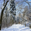 Stock Photo: Beautiful winter with a lot of snow in the forest