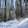Beautiful winter with a lot of snow in the forest — Stock Photo
