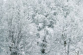 Beautiful winter with a lot of snow in the forest — 图库照片
