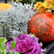 Halloween decorations with pumpkin and lot of flowers — Stock Photo #34086995