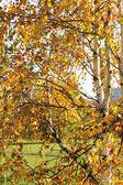Beautiful yellow and orange autumn leaves — Stock Photo
