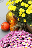 Halloween decorations with pumpkin and lot of flowers — Photo