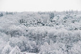 Beautiful winter with a lot of snow — Stock Photo