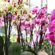 Big mix of amazing orchids — Stock Photo