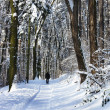 Stock Photo: Beautiful winter with lot of snow in forest