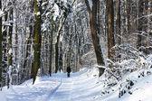 Hermoso invierno con mucha nieve en el bosque — Foto de Stock