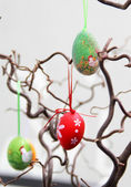 Easter eggs hanging on the tree — Foto de Stock
