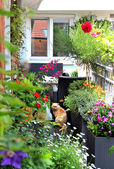 Beautiful modern terrace with a lot of flowers — Stock Photo