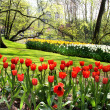 Beautiful park in spring with pond — Stock Photo #39327859