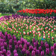 Mix of Holland tulips and hyacinths — Stock Photo
