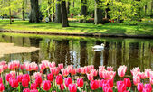 Beautiful park in spring with pond — 图库照片