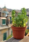 Krásné středomořské terasa s květinami — Stock fotografie