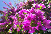 Beautiful Mediterranean terrace with pink flowers — Stock Photo