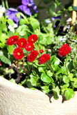 Mix of beautiful vivid terrace flowers — Stock Photo