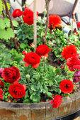 美しい鮮やかなテラスの花のミックス — ストック写真