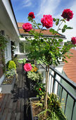 Beautiful terrace with a lot of flowers — Stockfoto