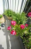 Mischung aus lebhaften Terrasse Blumen — Foto de Stock