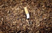 Tobacco Pile Cigarette — Stock Photo