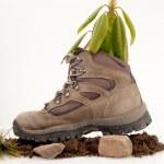 Flower Boot — Stock Photo #18126215