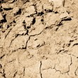 Dried Out Mud — Stock Photo