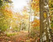 トレイル色葉を秋します。 — ストック写真