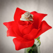 Stock Photo: Gold Wedding Rings On Red Rose