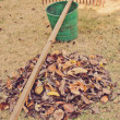 Stock Photo: Raking the leaves