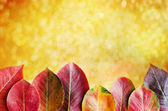 Beautiful autumn background with pear leaves — Stock Photo