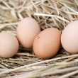 Domestic eggs in straw — Stock Photo