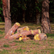 Stock Photo: Heap of sawn pine logs in park