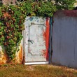 Stock Photo: Grunge metal door surrounded with Virginia Creeper