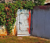 Grunge metal door surrounded with Virginia Creeper — Stock Photo