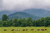 Horses eating grass — Stock Photo