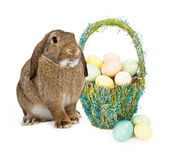 Easter Bunny With Basket of Eggs — Stock Photo