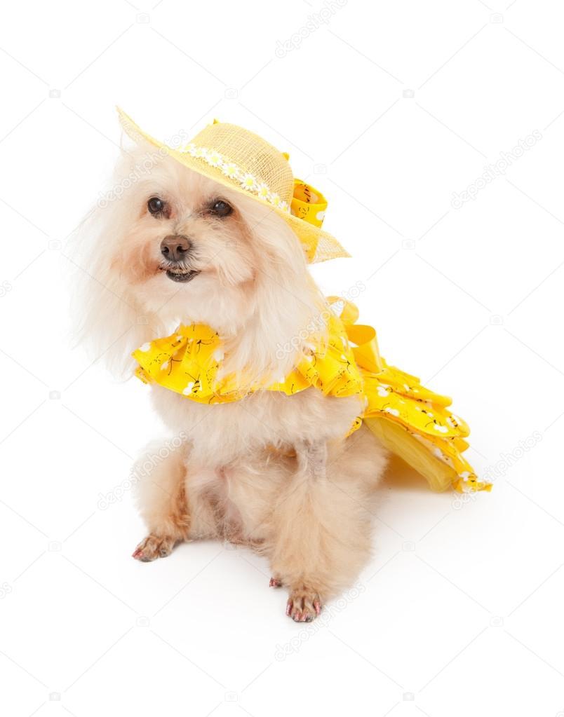 Собака в желтом платье