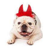 Bulldog wearing devil horns — Stock Photo