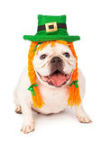 Bulldog Wearing Irish Hat and Hair Braids — Stock Photo