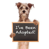 Terrier Mix Dog Holding Adoped Sign — Stock Photo