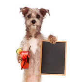 Terrier Holding Drink and Sign — Stock Photo