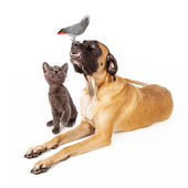 Dog and cat looking at a bird — Stock Photo