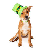 Crossbreed Puppy Wearing St Patricks Day Hat — Stock Photo