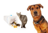 Guilty cat with innocent dog — Stock Photo