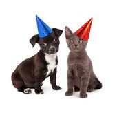 Puppy and Kitten Wearing Party Hat — Stock Photo