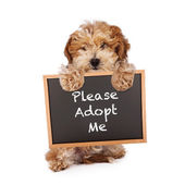 Havanese Crossbreed Holding Adopt Me Sign — Stock Photo