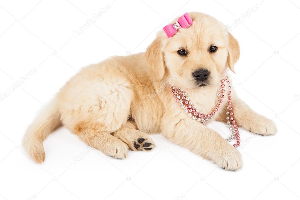 Funny Small Girl Dog Names