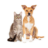 Yellow Dog and Tabby Cat — Stock Photo