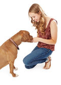 Young Woman Giving Pit Pull A Treat — Stockfoto