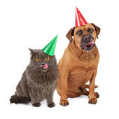 Dog and Cat Wearing Birthday Hat and Licking Lips — Stock Photo