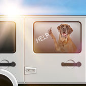 Dog Trapped In A Hot Car — Stock Photo